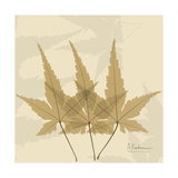 Japanese Maple Moments 3 Premium Giclee Print by Albert Koetsier