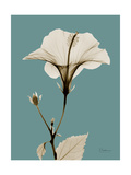 Tonal Hibiscus on Blue Print by Albert Koetsier