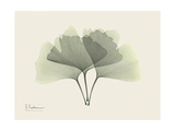 Ginko Moments Premium Giclee Print by Albert Koetsier