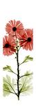 Red Chrysanthemums Premium Giclee Print by Albert Koetsier