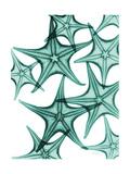 Starfish Premium Giclee Print by Albert Koetsier