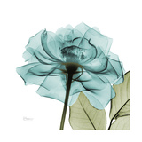 Teal Rose Green Art by Albert Koetsier