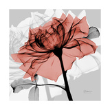 Rose on Gray 2 Premium Giclee Print by Albert Koetsier