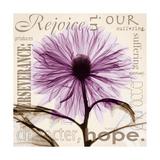 Chrysanthemum Hope Premium Giclee Print by Albert Koetsier