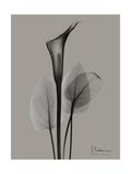 Flora Portrait A Premium Giclee Print by Albert Koetsier