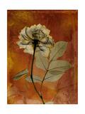 Topaze Opus Rose Premium Giclee Print by Albert Koetsier