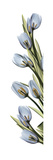 Cascading Tulips Poster by Albert Koetsier