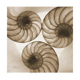 Nautilus Trio Premium Giclee Print by Albert Koetsier