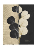 Eucalyptus Invert Posters by Albert Koetsier