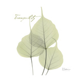 Bo Tree Tranquility Premium Giclee Print by Albert Koetsier