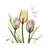 Tulip Love Premium Giclee Print by Albert Koetsier
