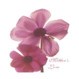 Magnolia Pair Premium Giclee Print by Albert Koetsier