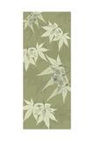 Green Japanese Maple Premium Giclee Print by Albert Koetsier