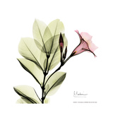 Mandelilla Square Premium Giclee Print by Albert Koetsier