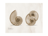 Nautilus Moments Print by Albert Koetsier