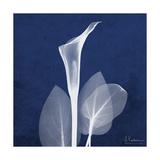 One Indigo Calla Lily Premium Giclee Print by Albert Koetsier