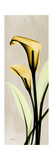 Calla Lily Moment Prints by Albert Koetsier