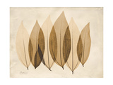 Coculus Leaf Moments Prints by Albert Koetsier