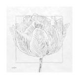 Tulipa 1 Prints by Diane Stimson
