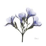 Lilac Oleander Premium Giclee Print by Albert Koetsier