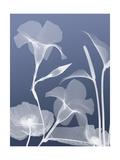 Transparent Flora 4 Posters by Albert Koetsier