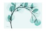 Teal Eucalyptus Giclee-tryk i høj kvalitet af Albert Koetsier