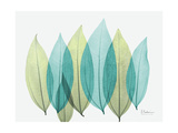 Spring Coculus Leaves Posters by Albert Koetsier