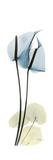 Anthurium Blues Premium Giclee Print by Albert Koetsier