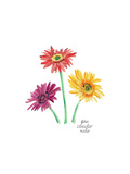 Gerber Daisies Posters by Gina Maher
