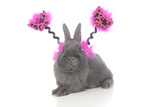 Rabbits 020 Impressão fotográfica por Andrea Mascitti
