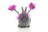 Rabbits 021 Impressão fotográfica por Andrea Mascitti
