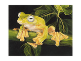 Musky Flying Frog Giclee Print by Barbara Keith