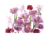 Flowers Giclee Print by Andrzej Pluta