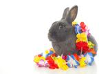 Rabbits 019 Impressão fotográfica por Andrea Mascitti