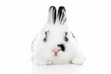 Rabbits 012 Impressão fotográfica por Andrea Mascitti