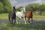 Fantasy Horses 25 Stampa fotografica di Bob Langrish