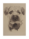 Border Terrier Giclee Print by Barbara Keith