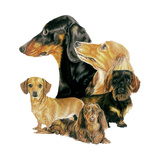 Dachshund Giclee Print by Barbara Keith
