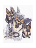 German Shepard Giclee Print by Barbara Keith