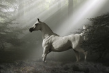 Fantasy Horses 35 Photographic Print by Bob Langrish