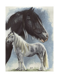 Gypsy Cob Giclee Print by Barbara Keith