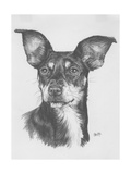 Chiweenie Giclee Print by Barbara Keith
