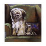 Tibetan Terrier Giclee Print by Barbara Keith
