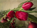 Holiday Red Photographic Print by Bob Rouse
