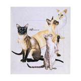 Siamese Giclee Print by Barbara Keith