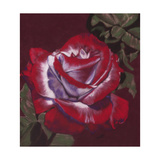 Ruby Giclee Print by Barbara Keith