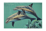 GP-Common Dolphins Giclee Print by  Apollo