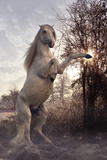 Fantasy Horses 44 Photographic Print by Bob Langrish