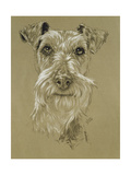 Irish Terrier Giclee Print by Barbara Keith