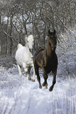 Fantasy Horses 42 Photographic Print by Bob Langrish